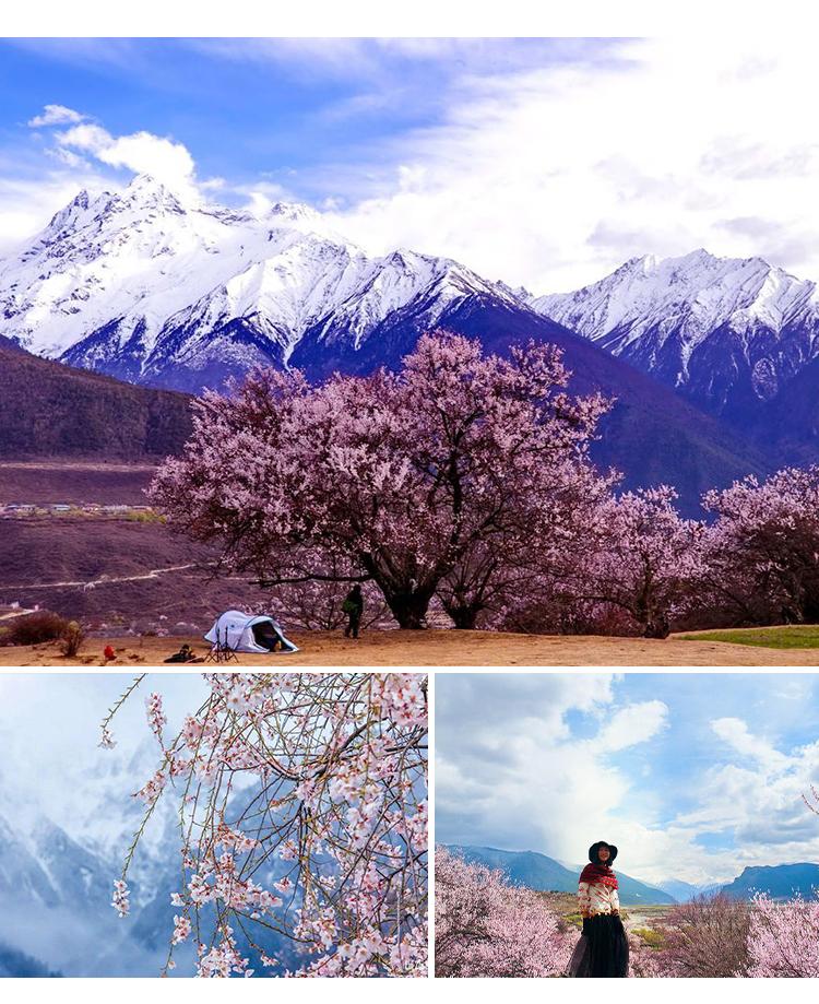 西藏2_06